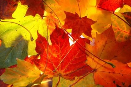 秋天游玩风景图 卡通