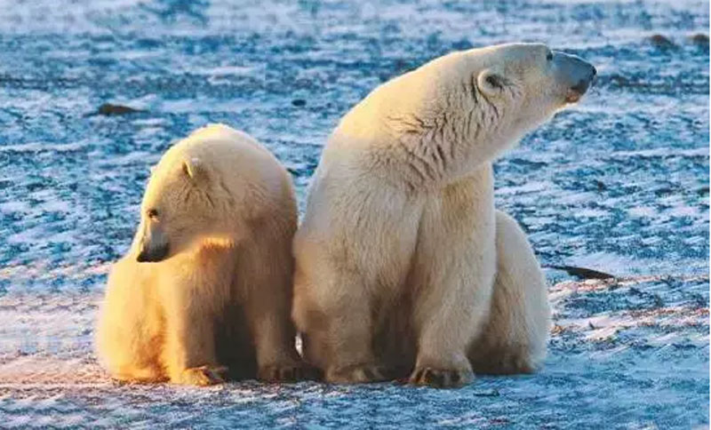 加拿大10大野生动物观赏地